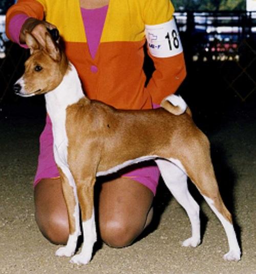 FoPaw's Basenjis - Show Dogs