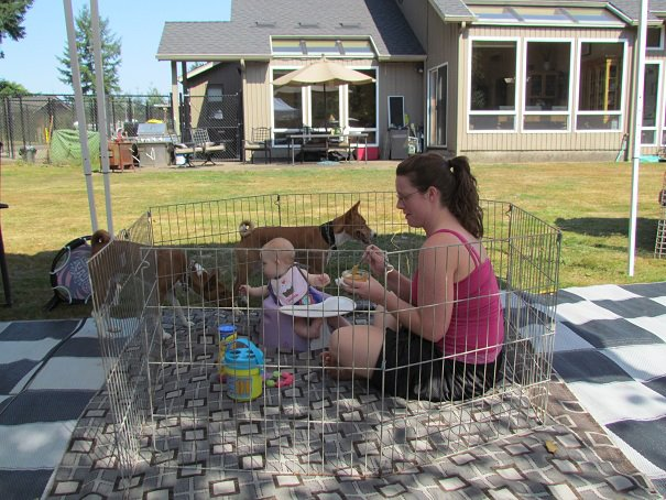 baby in pen, dogs on the loose