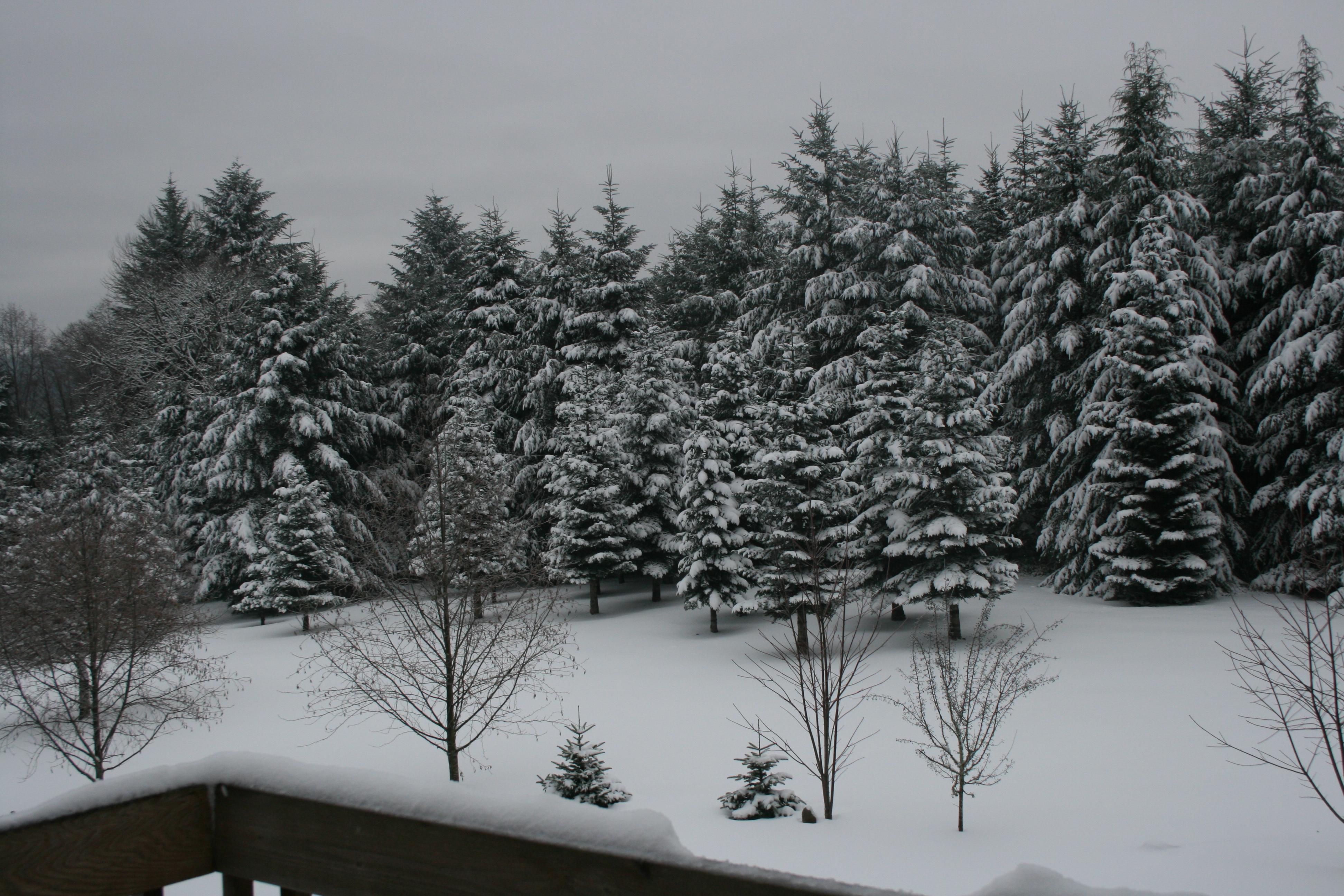 Snow December 2008 at FoPaws