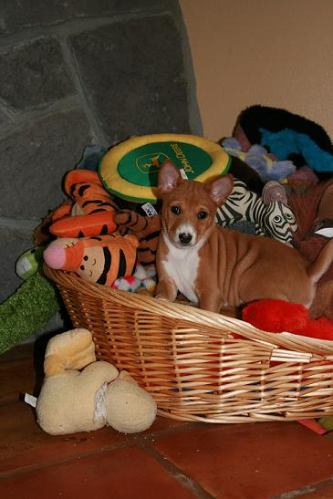 Salsa in the toy basket
