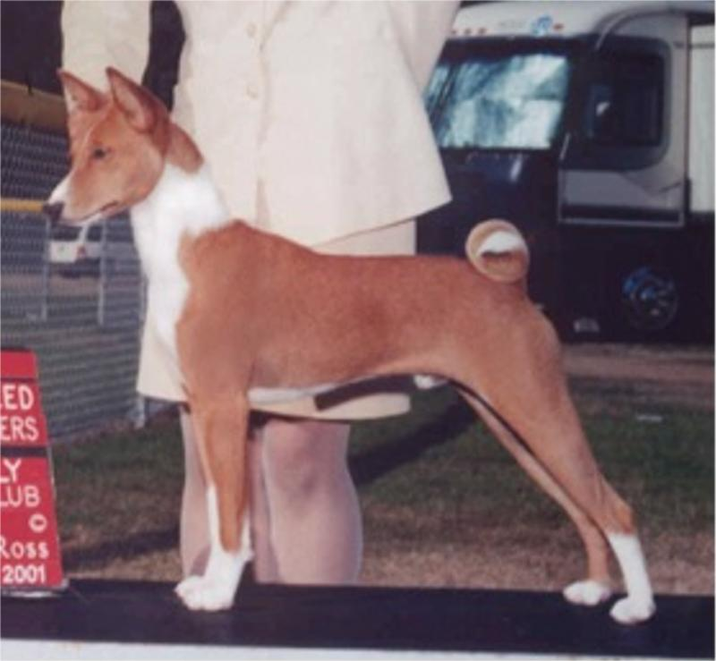 Sober winning breed from classes